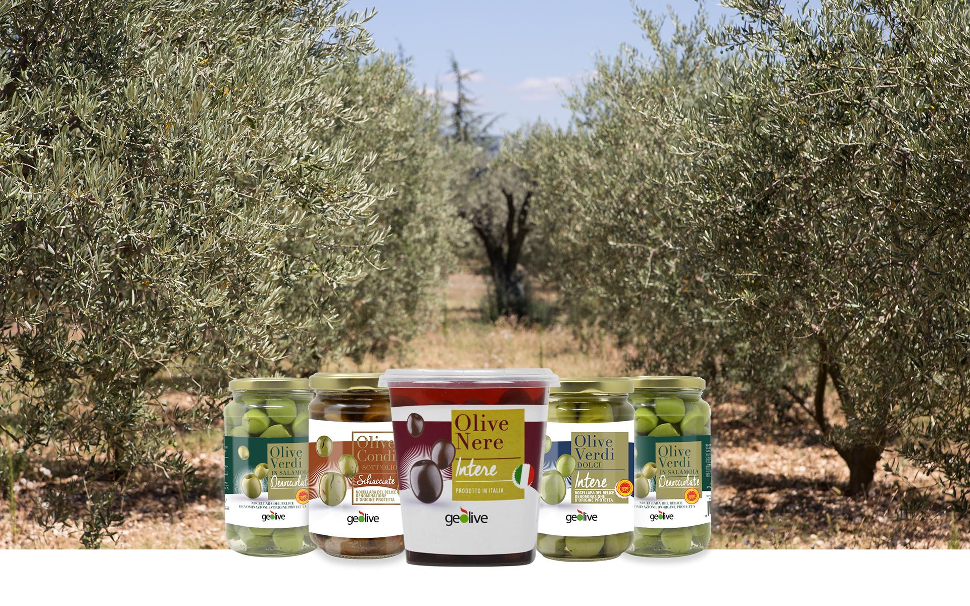 Geolive Belice, azienda leader nella produzione di olive Nocellara del Belìce DOP, Castelvetrano, Trapani.